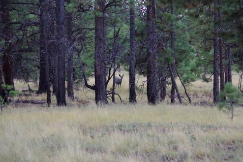 Uudishimulik pilk jälgimas, kes tema metsa õige ööbima saabus?