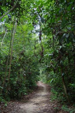 Rada viib džunglisse.