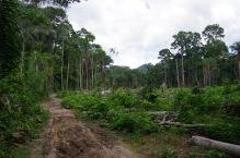 Lageraielangid on Peruus veel koledamad kui Eestis. Sellest siin pidi saama viljaaed.