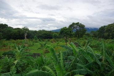 Concepcioni vulkaanimäest suurem osa on pilvedesse peidetud.